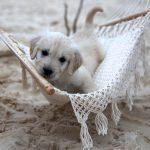 DogCathammock_copy__05194.1500603652.1280.1280